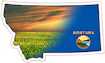 State of Montana Magnets